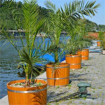 Palmy na Dvořákově nábřeží
