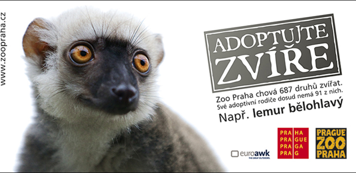 Prague Boats has adopted lemur in Prague zoo